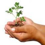 milieu plantje